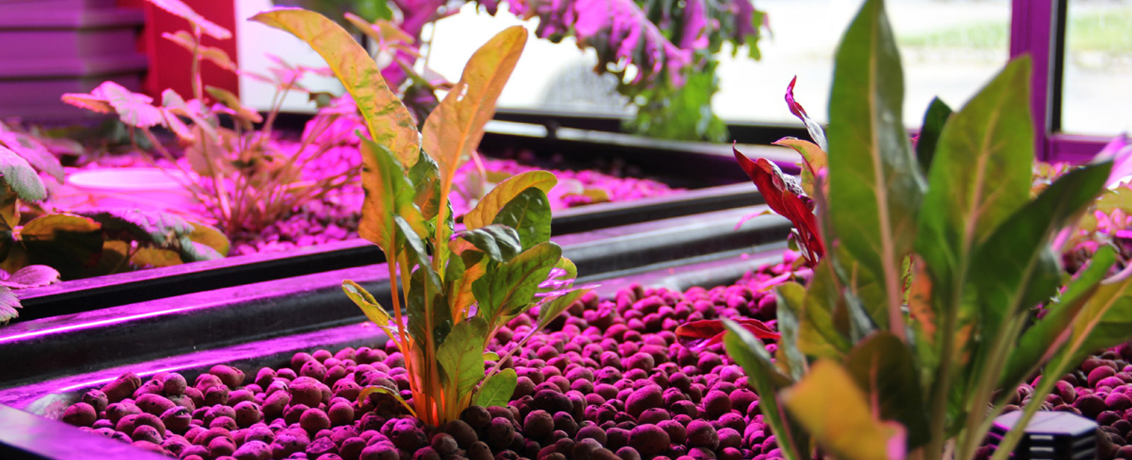 Aquaponic, Hydroponic, Organic and Biological Growing Systems